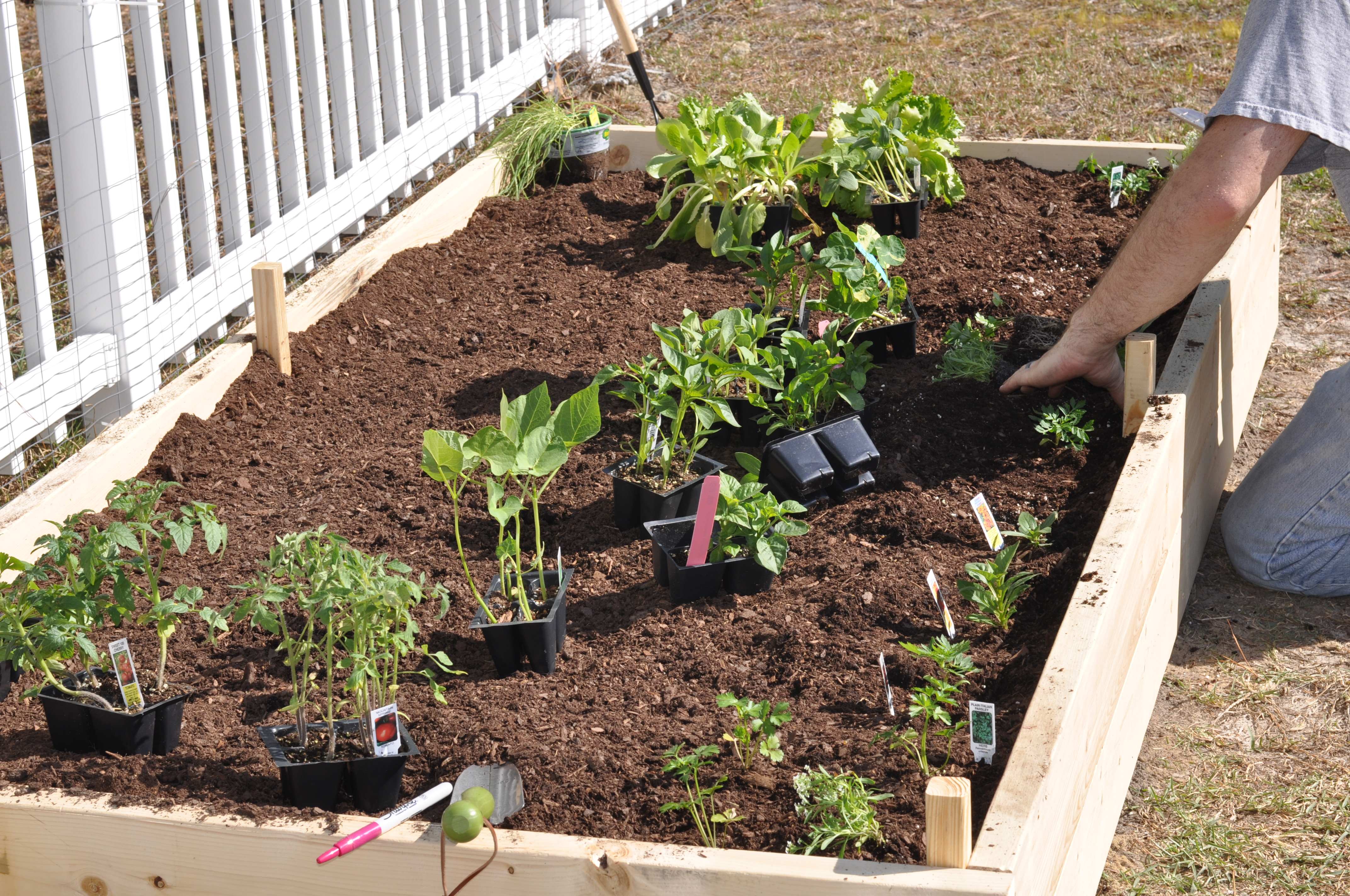 Arranging Plants in Raised Bed