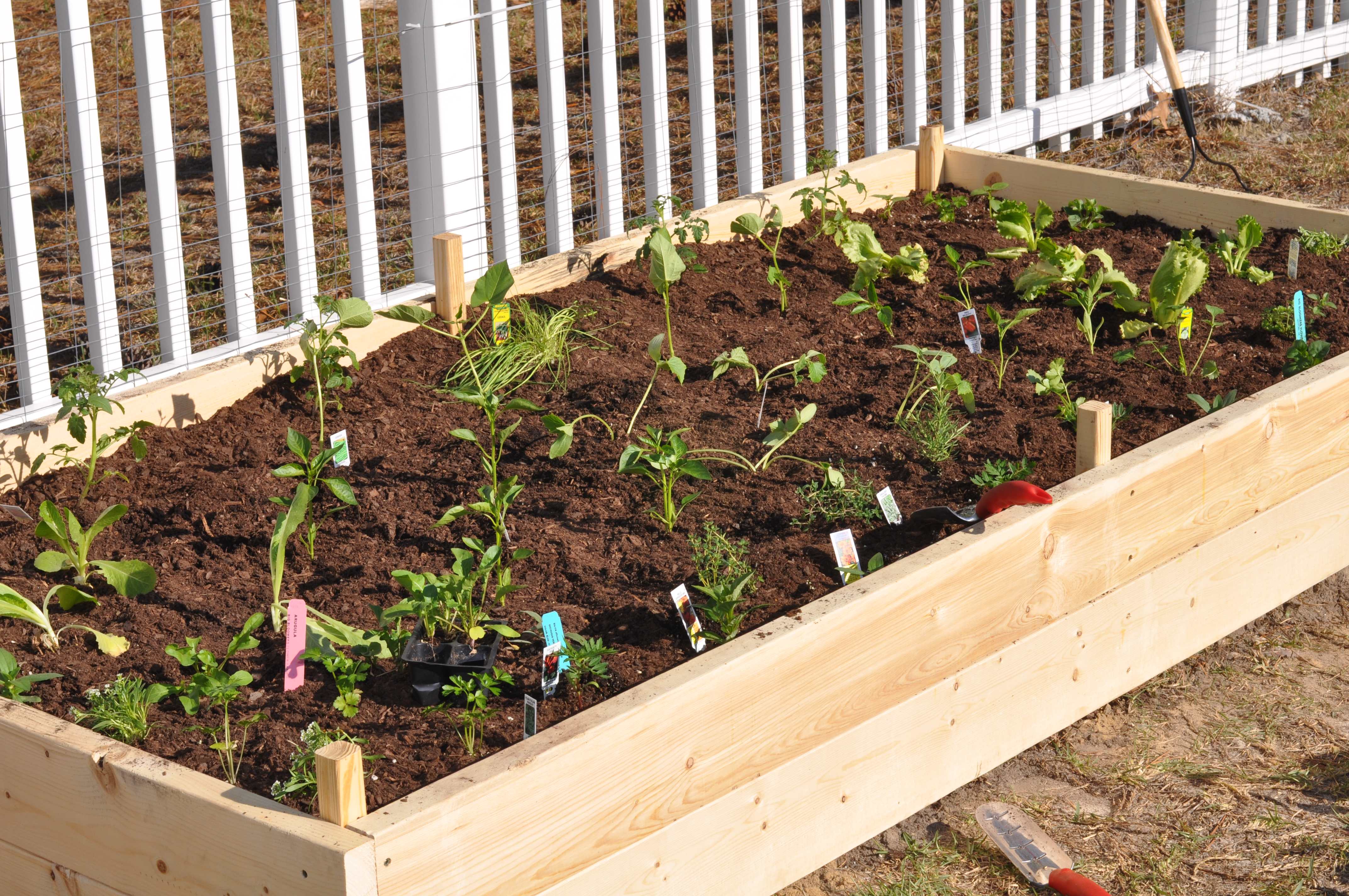 Planting a Raised Vegetable Bed