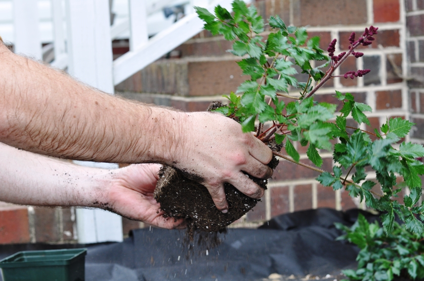 How to Plant Bushes