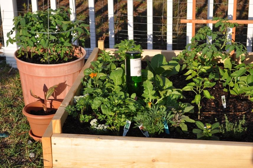 Plant Nanny for Wine Bottles