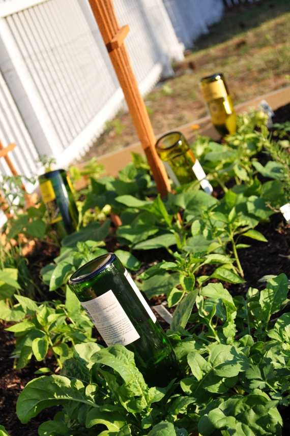 Wine Bottle Plant Nannies