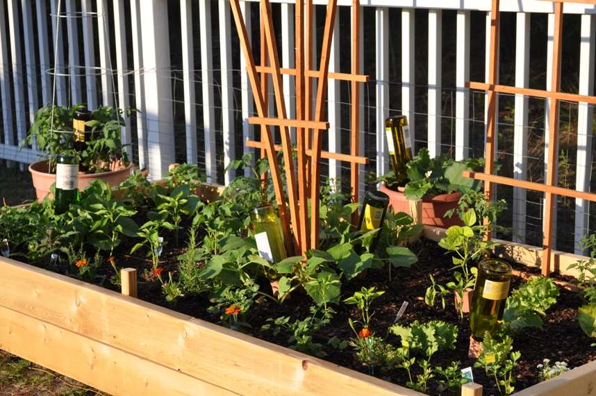 Wine Bottle Plant Nannies Raised Bed