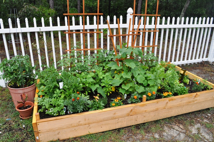 Kitchen Garden Raised Bed