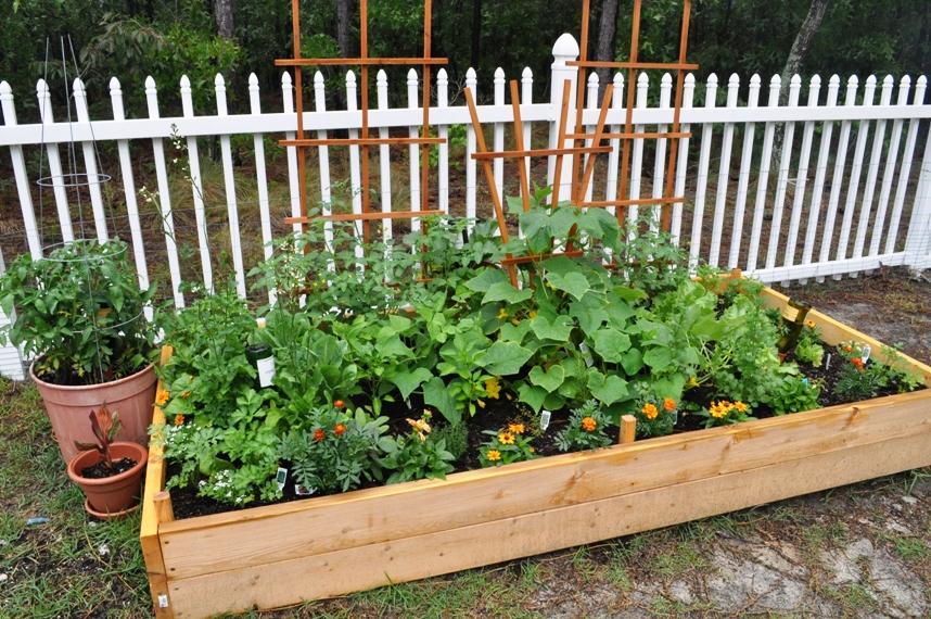 Kitchen Garden Raised Bed