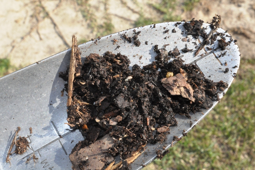 Termites in raised garden bed